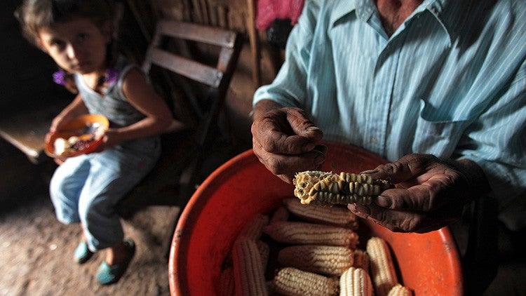 Maíz cosechado en los campos de Terrabona, Nicaragua, el 11 de octubre de 2012.