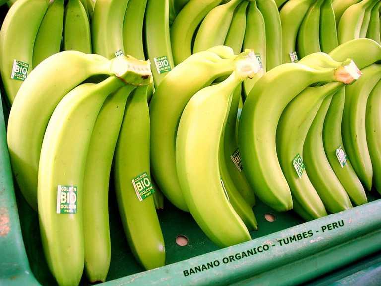 Cortés: Fincas bananeras pierden alrededor de L. 40 millones por huelga