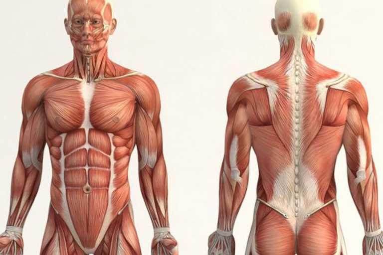 Científicos revelan una característica hasta ahora desconocida en la anatomía humana