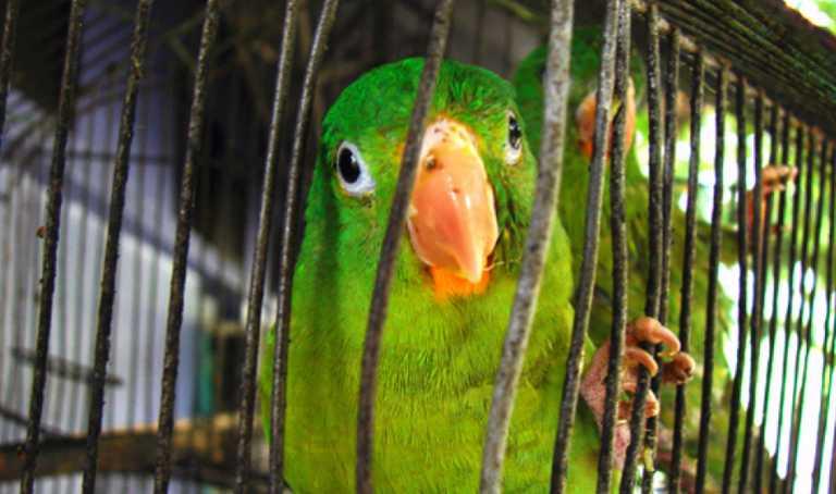 Ciudadanos tendrán que pagar L 358 por registrar sus aves en Honduras