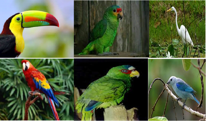 registro de aves silvestres en Honduras