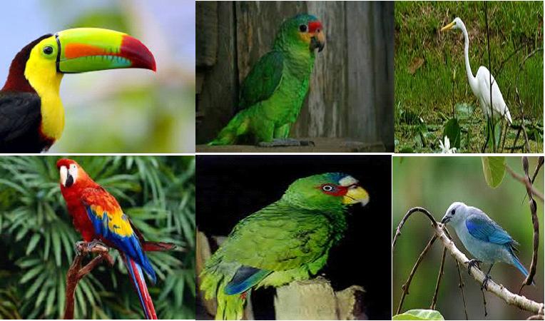 Derogan requisito de pago para el registro de aves silvestres en Honduras