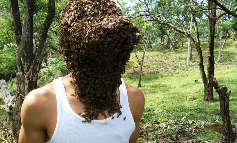 «Hombre abeja» lleva a su cuerpo más de 40 mil abejas sin sufrir picaduras