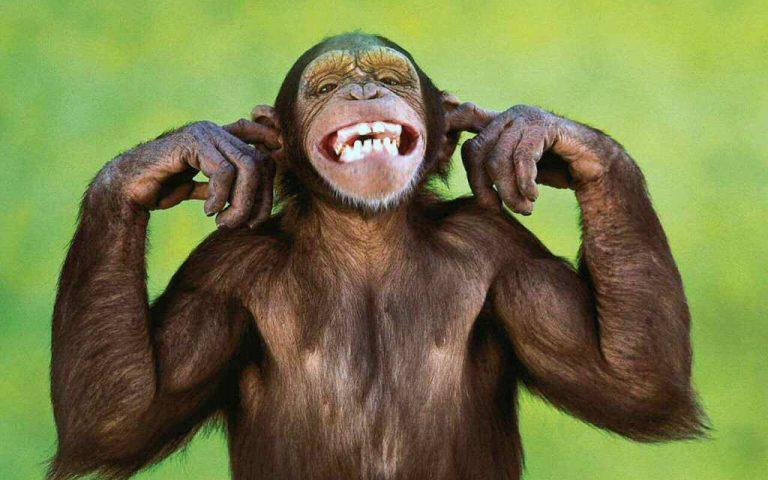 Mono le propina mordidas a mujer y la manda al hospital en Comayagua