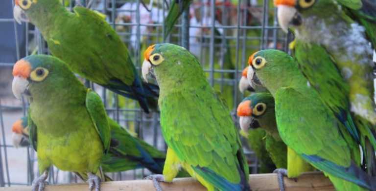 Hasta la fecha ICF no devuelve el dinero obtenido por registro de aves