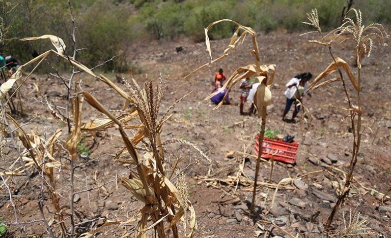 Canícula y el fenómeno del Niño provocarán estragos en sector agropecuario
