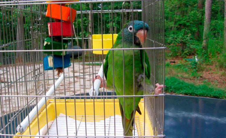 Dan fecha para devolver el dinero cobrado por el registro de aves