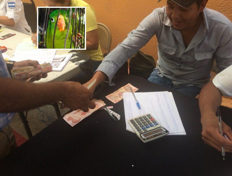 ICF se «resiste» a devolver dinero solicitado por el registro de aves