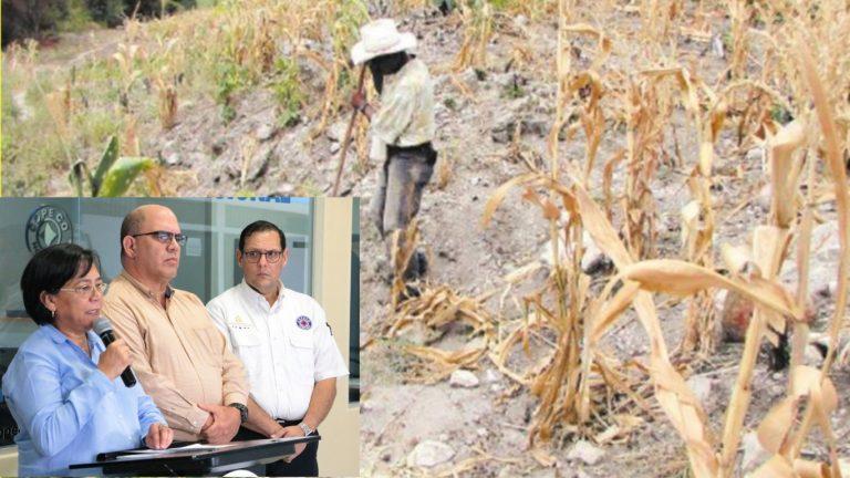 Por riesgo de hambruna y ante sequía declaran emergencia en Corredor Seco