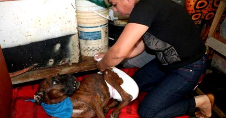 HISTORIA HUMANA: Silvia Alfaro, el ángel guardián de los animales desamparados