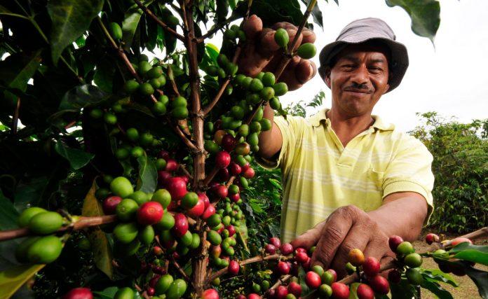 precio del café