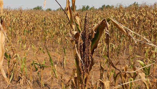 Sequía prolongada