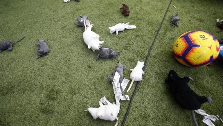 Ratas de peluche en la placa de Courtois