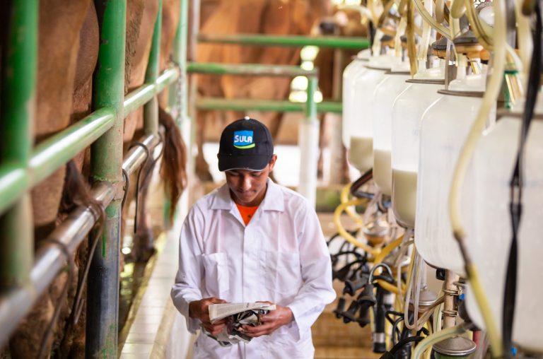 Arranca proyecto piloto de crédito al sector de la ganadería de Honduras
