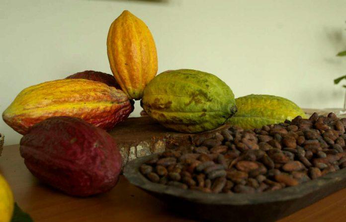 indígenas hondureños descubrieron el chocolate