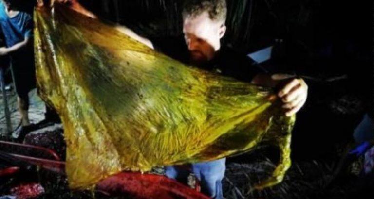 Encuentran ballena con 40 kilos de plástico en su estómago