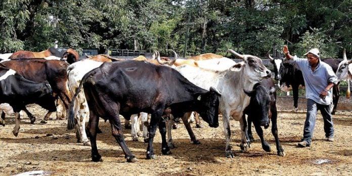 """Síndrome """"las vacas flacas"""""""
