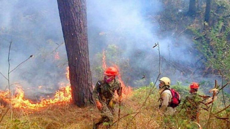 ICF: Incendios forestales han consumido más de 6 mil hectáreas de bosque