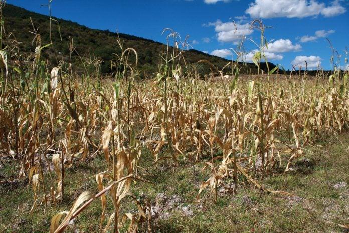 Sequía será más prolongada en 2019