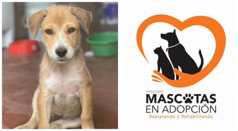 Fundación «Mascotas en adopción Honduras» cerrará: ¡No tenemos dinero!