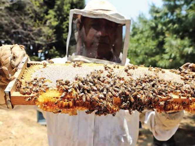 """Abejas en peligro de extinción: """"Nos quedaríamos sin alimentos"""", apicultores"""