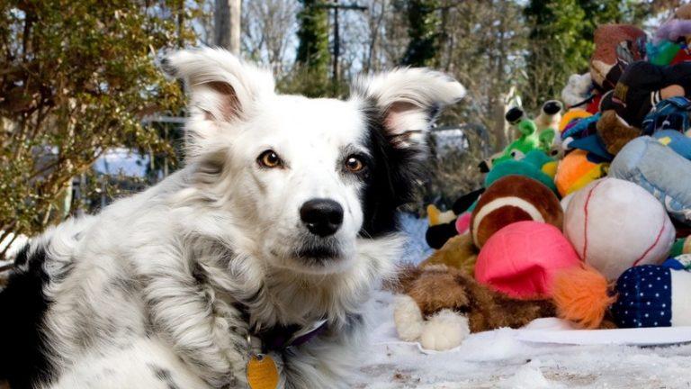 Chaser, «el perro más inteligente del mundo», muere a los 15 años