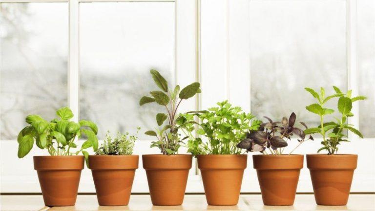 Heridas, indigestión y resaca: plantas que alivian problemas de salud comunes