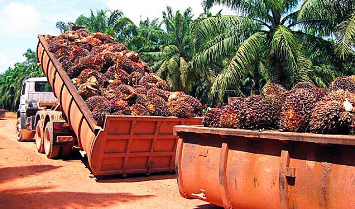 productores de palma africana