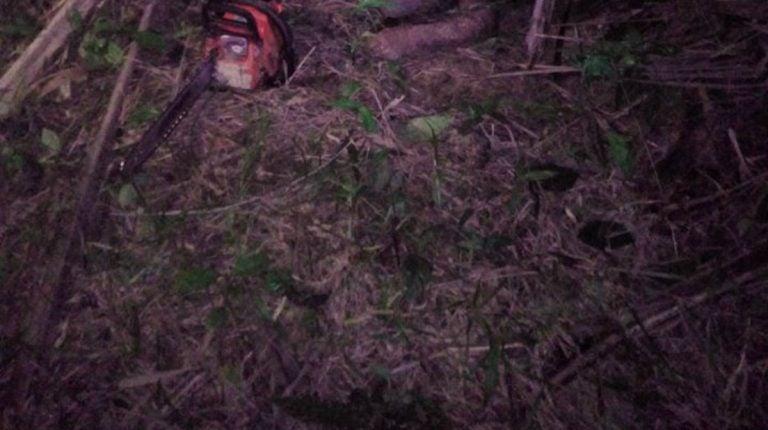 Atlántida: agricultor muere tras caerle encima el árbol que cortaba