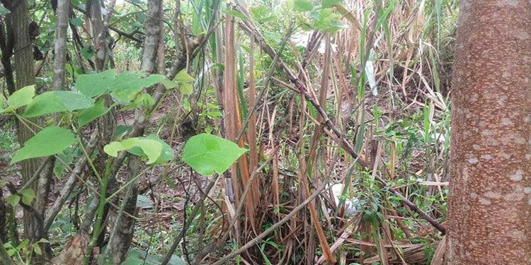 Encuentran muerto a líder de la Montaña de la Flor en Orica