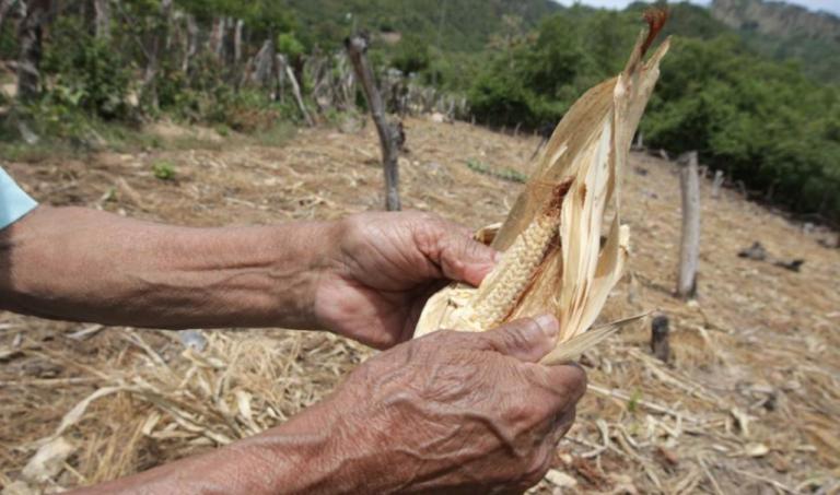 Sequía: unos 54 diques construirán en comunidades del Corredor Seco