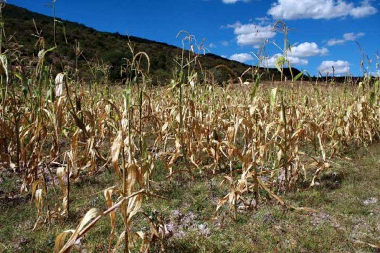 Fenómeno del niño dejará alarmante sequía en 2020