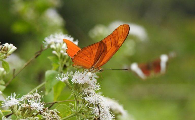 Bellos colores y fotografías en el Festival de Mariposas del Lago de Yojoa
