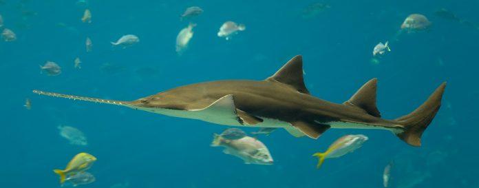 dos nuevas especies de tiburón