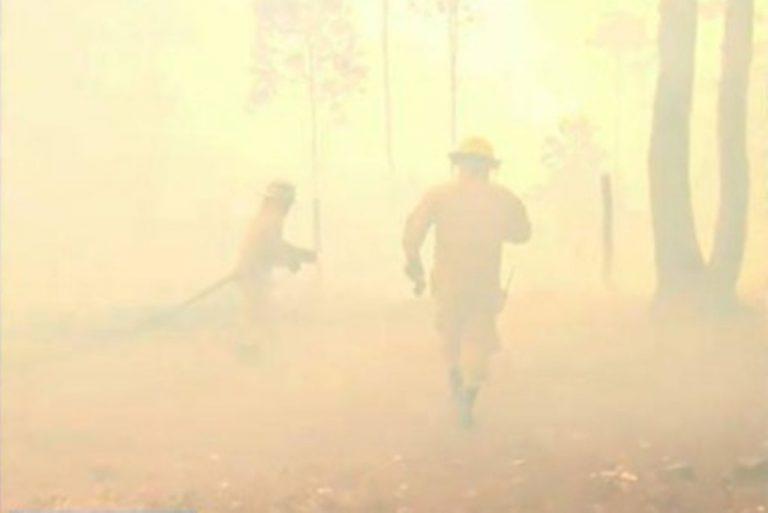 Peligroso incendio consume bosque en El Hatillo; ya hay familias evacuadas