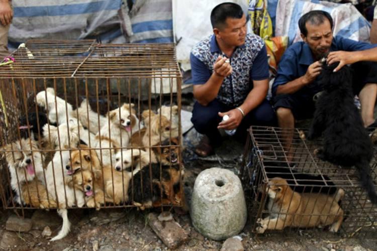 Covid-19: China elimina a perros y gatos de lista de animales comestibles