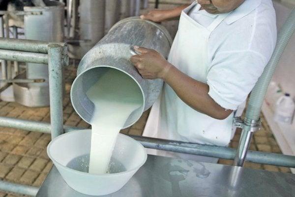 Olancho: Intermediarios bajan precio de la leche, denuncian productores