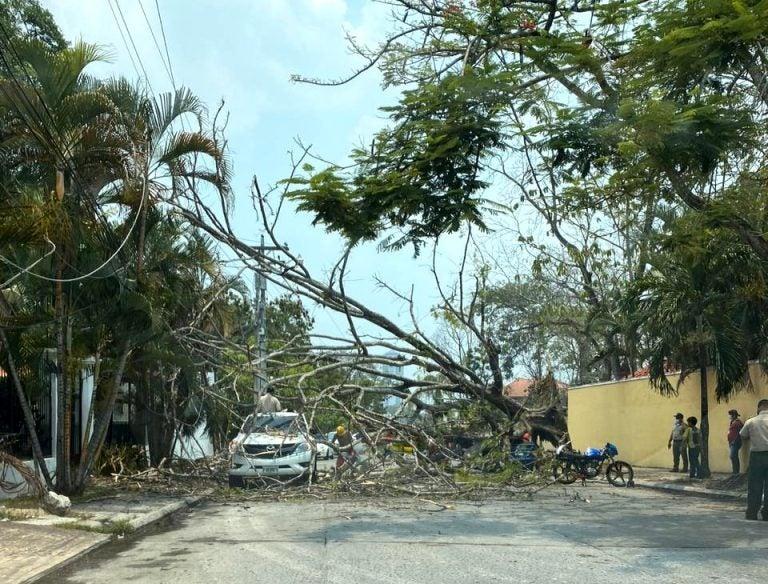 VÍDEO: En SPS, antiguo árbol se viene abajo y cae sobre repartidor de Glovo