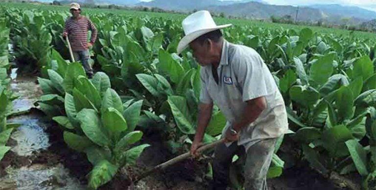 FAO: Honduras no tendrá problemas en producción de alimentos