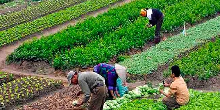 FENAGH: Crisis alimentaria será culpa de funcionarios del Gobierno