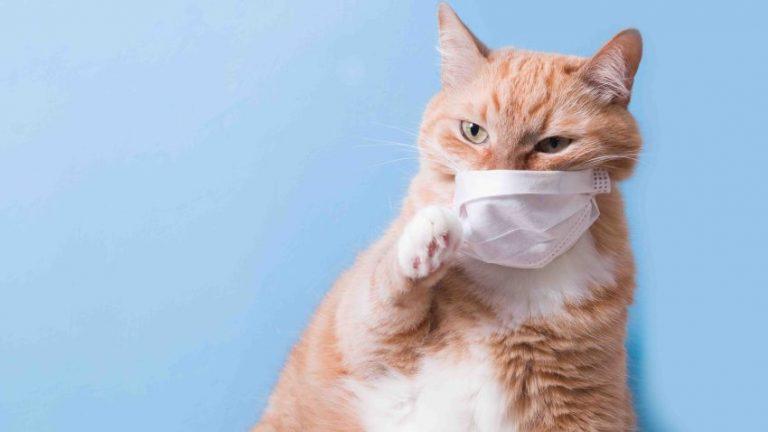 Gatos asintomáticos propagan el coronavirus a otros gatos