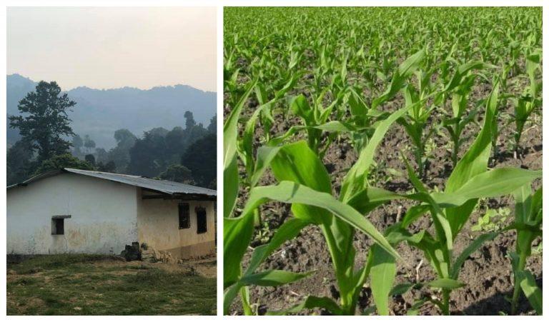 Campesinos de Monquecagua, Intibucá, pierden miles de lempiras en cultivos; urgen de alimentos
