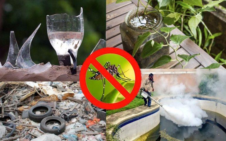 «Autodestrucción de criaderos» propone Salud para combatir el dengue