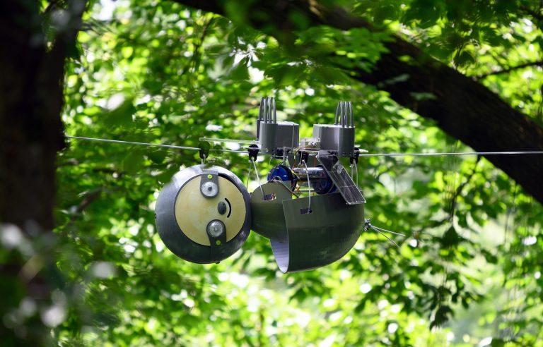 Crean robot que cuelga de árboles para vigilar la conservación de especies