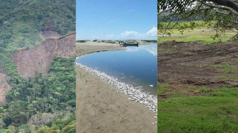 Masacre ambiental en cuarentena: El Merendón, Laguna de Ticamaya y peces del Aguán