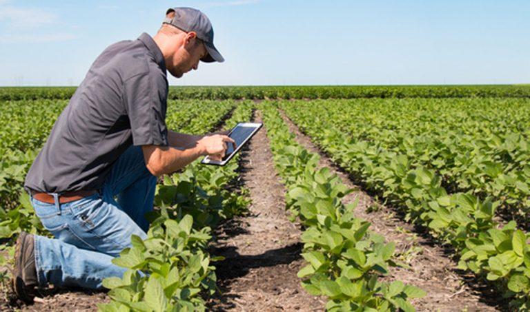 España: implementarán tecnología satelital para optimizar riego de cultivos