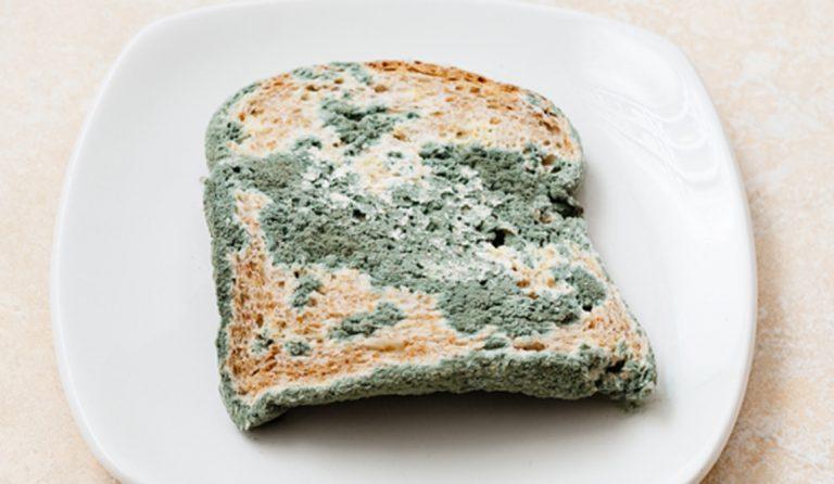Pan con moho: ¿qué ocurre si lo comemos?