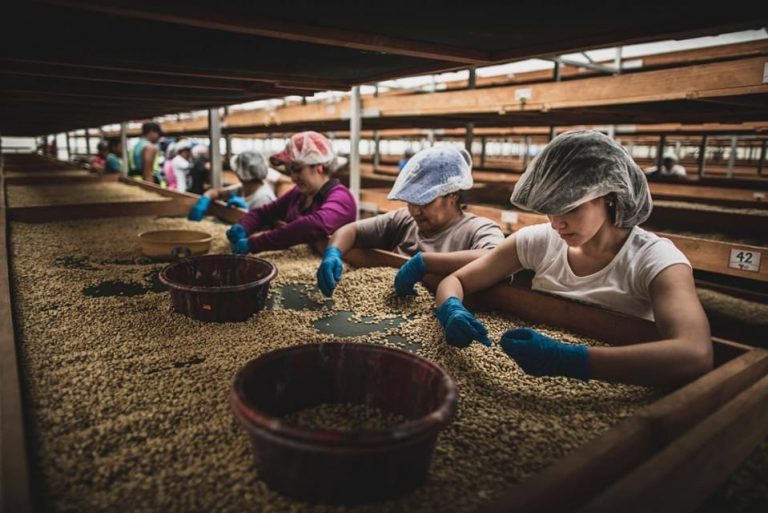 Evento cafetalero «Producer & Roaster Forum» celebrará 4ta edición en Honduras