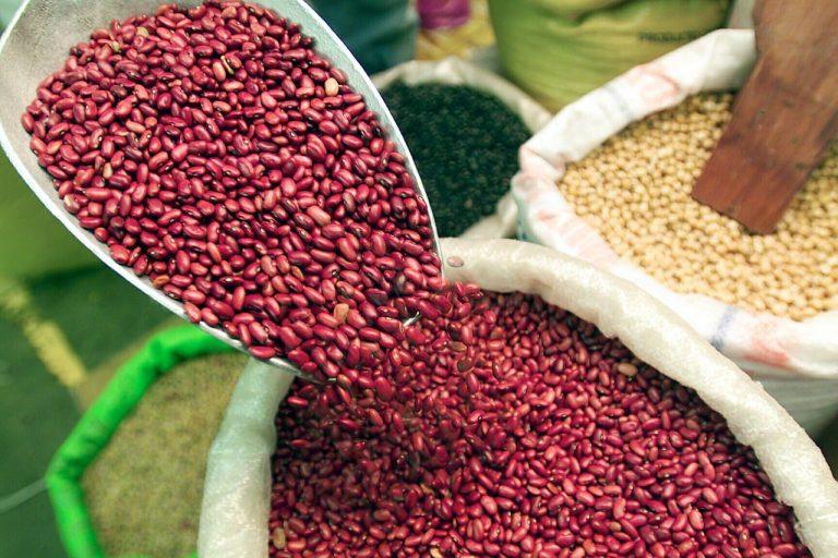 Siembra de granos básicos casi récord en oriente, según agricultor