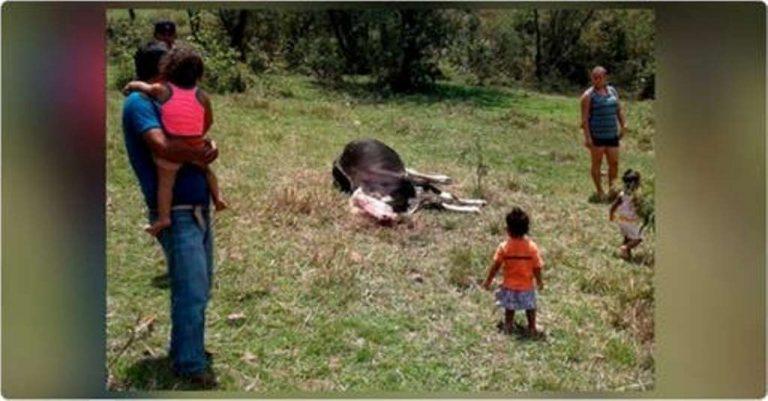 SENASA: Ganado en Patuca muere por anemia, no por chupacabras